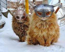 viking-cats-2